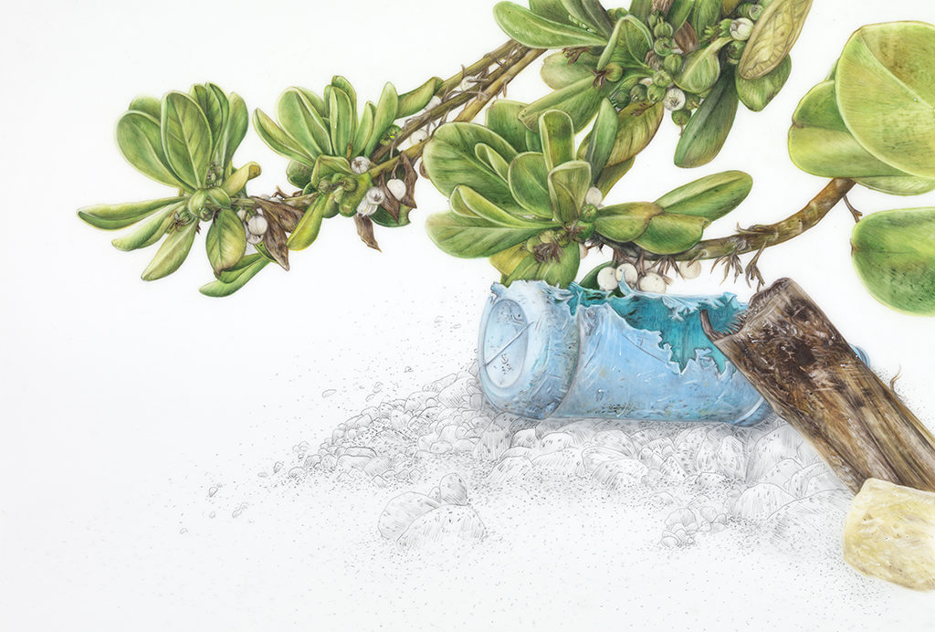 Evelyn Rydz, 'Tropical Almond Tree with Bottle', 2014, Pencil and Color Pencil on Drafting Film, 6x9 in.
