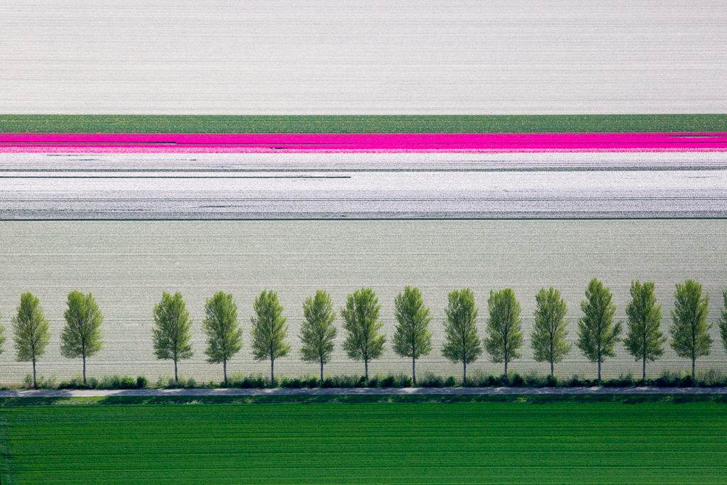 Alex MacLean, 'Tulip and Tree Rows', Creil, Netherlands, 2015, Lightjet Print, Various sizes