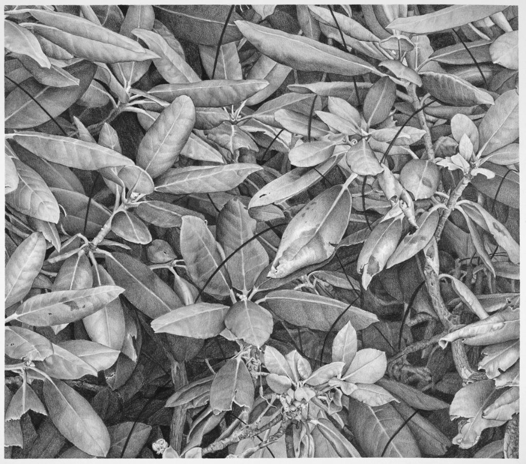 Kay Ruane, 'Small Leaves', 2017, Graphite on paper, 11x12.5 in.